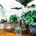 إختيار نباتات الزينة